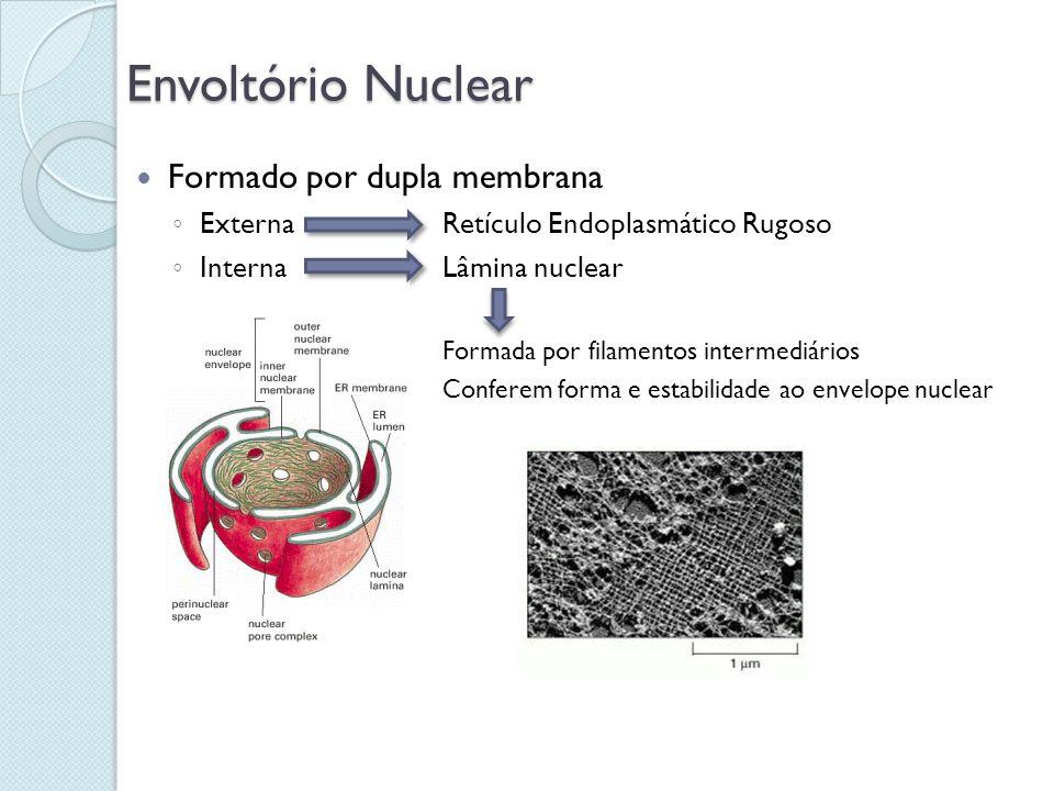 Envoltório Nuclear Formado por dupla membrana