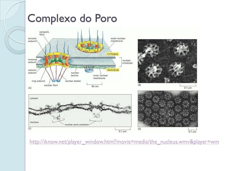 Complexo do Poro http://iknow.net/player_window.html movie=media/the_nucleus.wmv&player=wm
