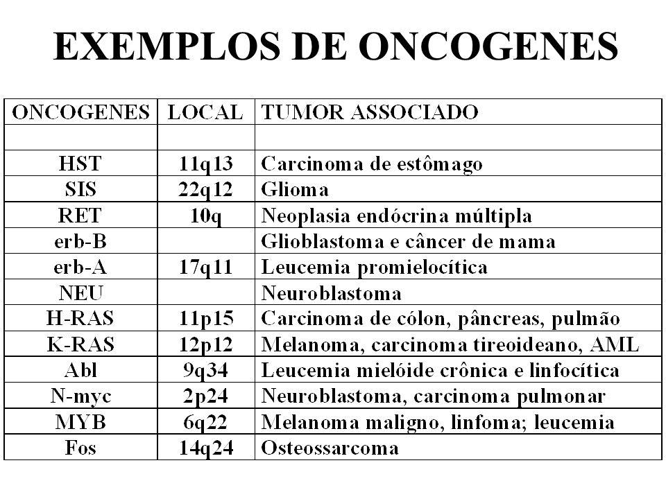 EXEMPLOS DE ONCOGENES