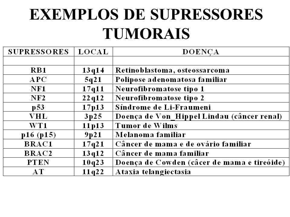 EXEMPLOS DE SUPRESSORES TUMORAIS