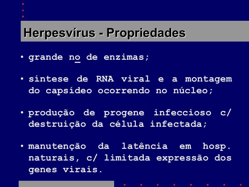 Herpesvírus - Propriedades