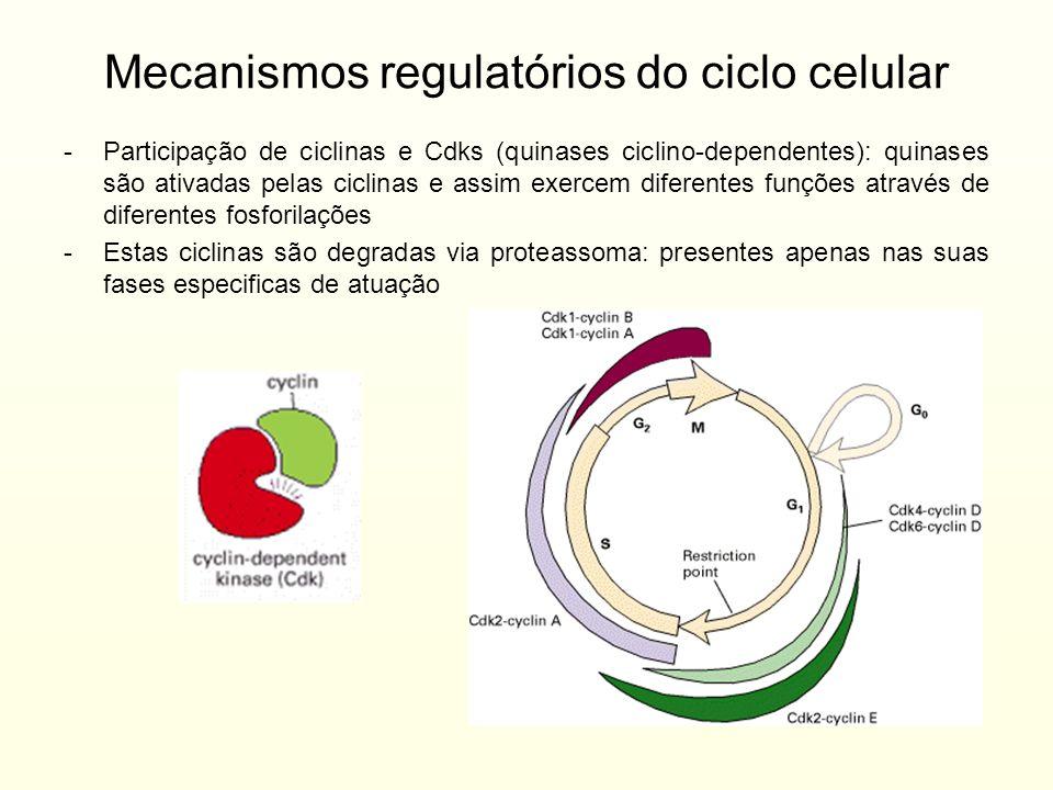Mecanismos regulatórios do ciclo celular