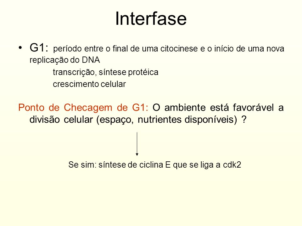 Interfase G1: período entre o final de uma citocinese e o início de uma nova replicação do DNA. transcrição, síntese protéica.