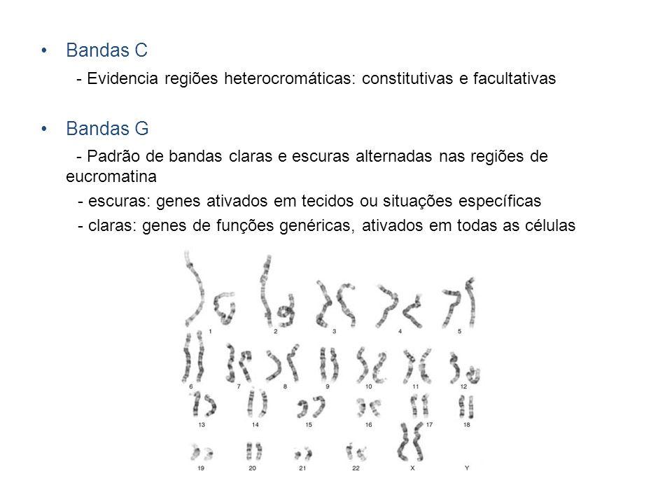 - Evidencia regiões heterocromáticas: constitutivas e facultativas