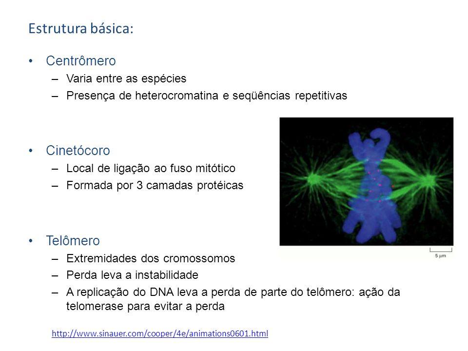 Estrutura básica: Centrômero Cinetócoro Telômero
