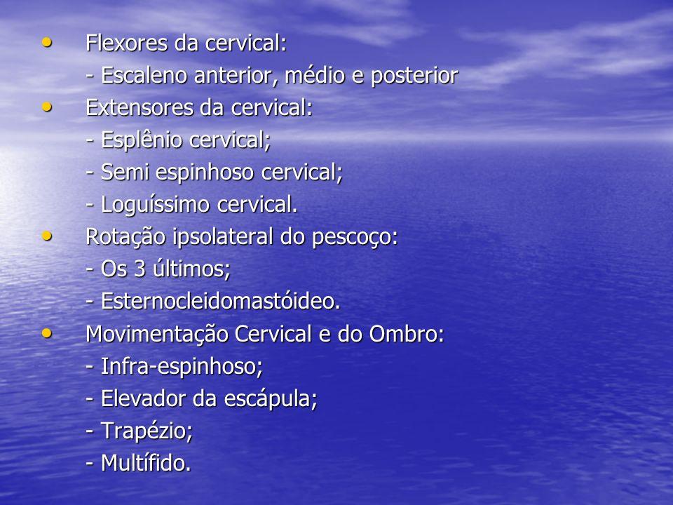 Flexores da cervical: - Escaleno anterior, médio e posterior. Extensores da cervical: - Esplênio cervical;