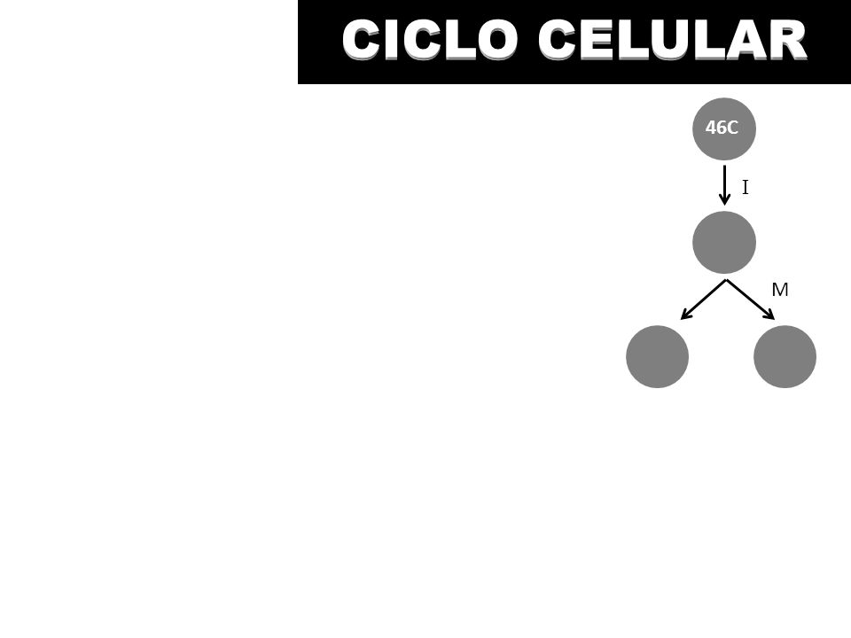 CICLO CELULAR CICLO CELULAR 46C I M