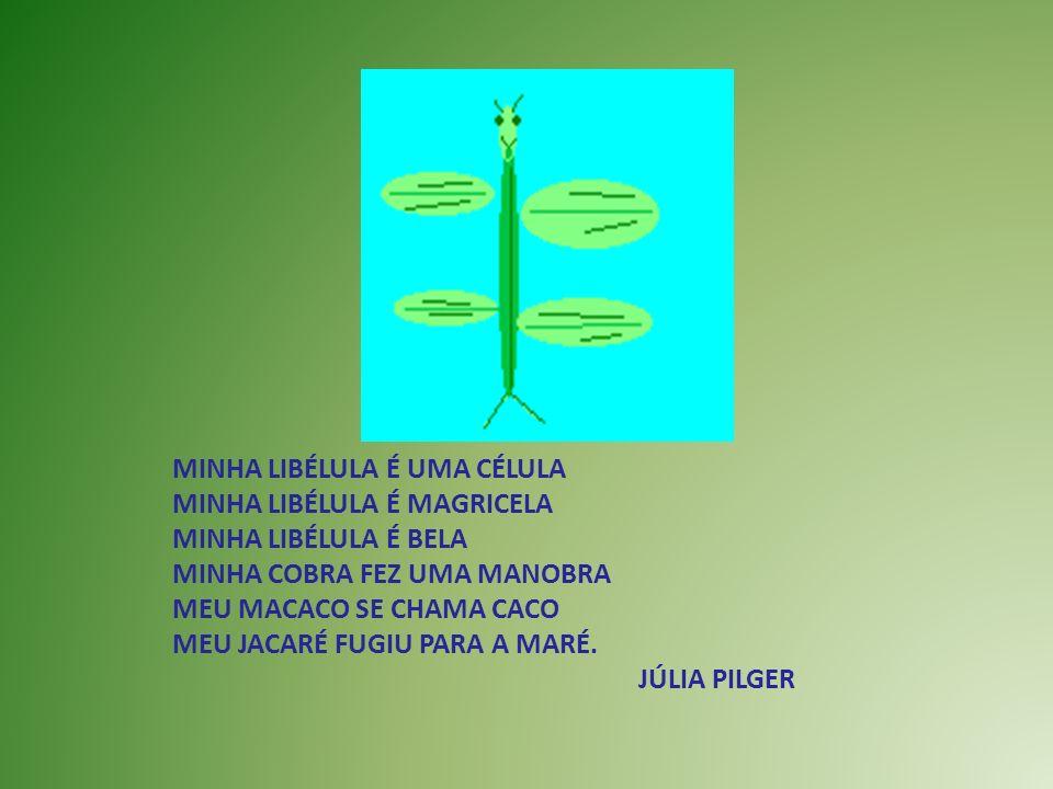 MINHA LIBÉLULA É UMA CÉLULA