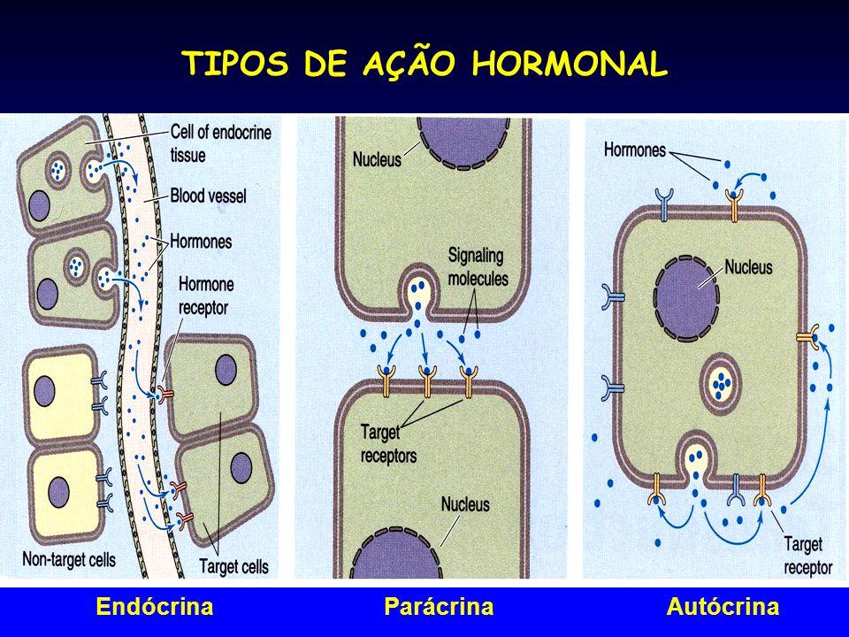 TIPOS DE AÇÃO HORMONAL Endócrina Parácrina Autócrina
