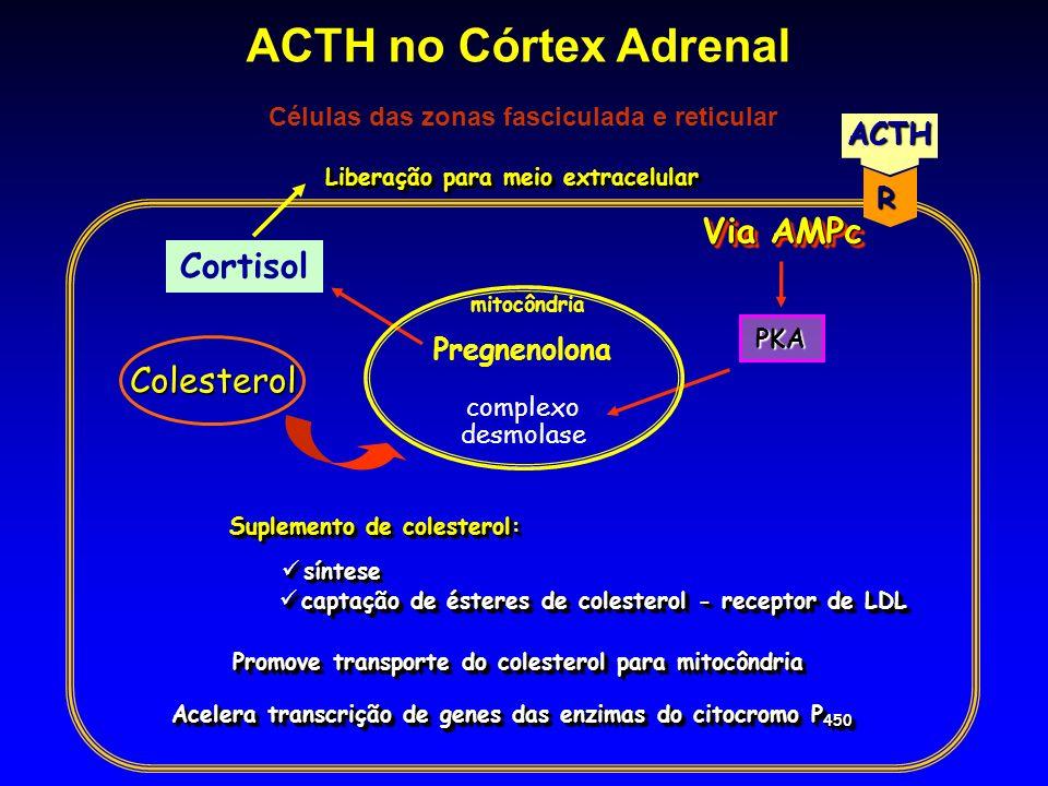 Células das zonas fasciculada e reticular