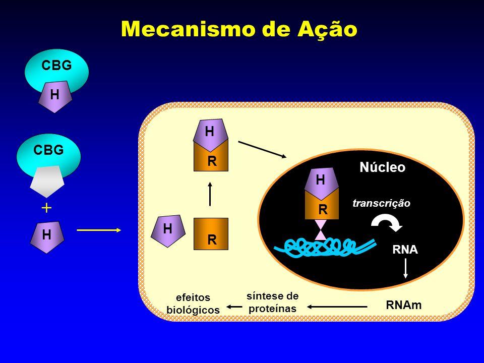 Mecanismo de Ação  CBG H H CBG R Núcleo H R H H R RNA RNAm