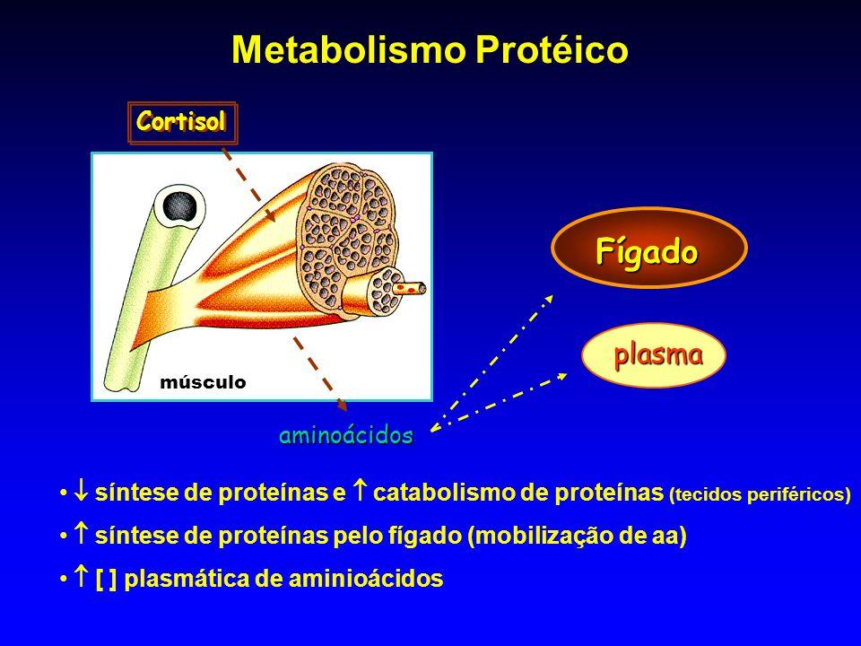 Metabolismo Protéico Fígado plasma Cortisol aminoácidos