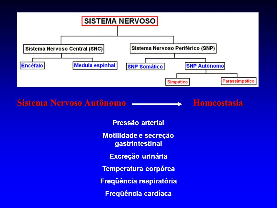 Motilidade e secreção gastrintestinal Freqüência respiratória