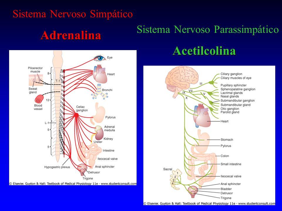 Adrenalina Acetilcolina