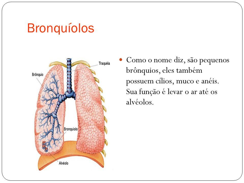 Bronquíolos Como o nome diz, são pequenos brônquios, eles também possuem cílios, muco e anéis.