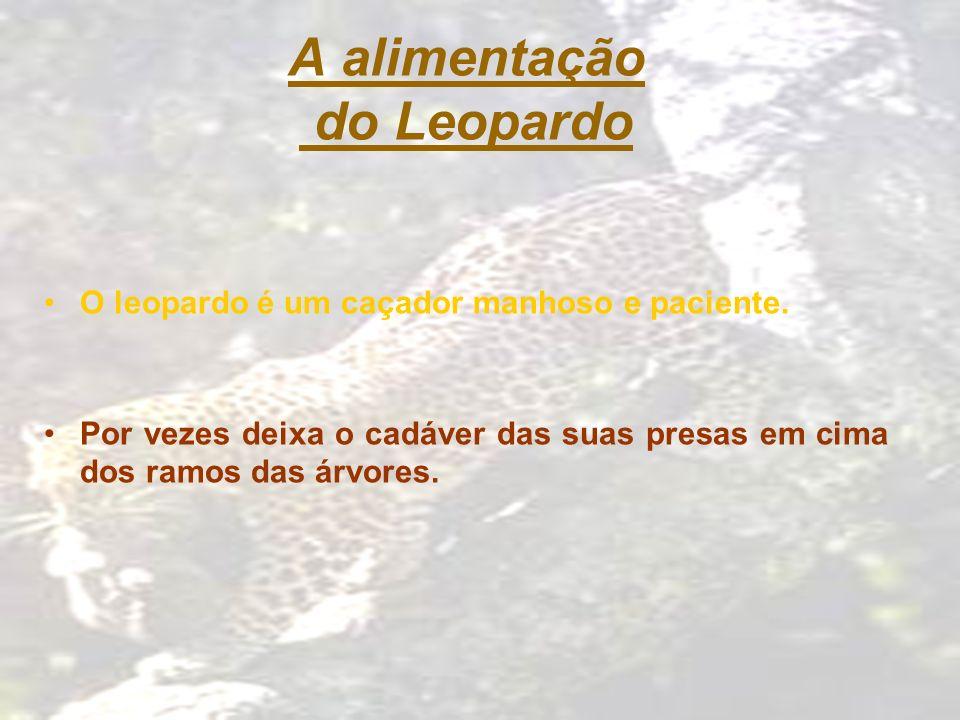 A alimentação do Leopardo