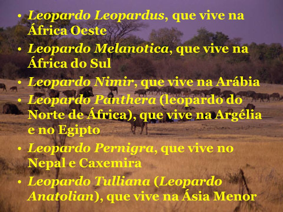 Leopardo Leopardus, que vive na África Oeste