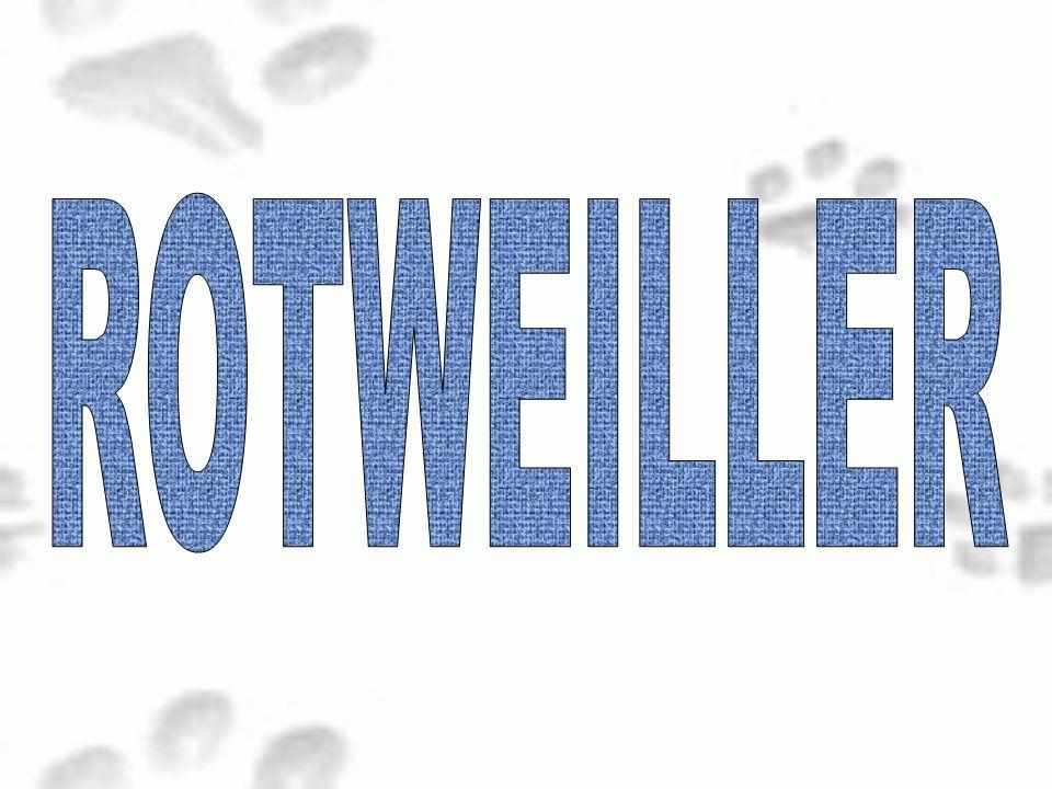 ROTWEILLER