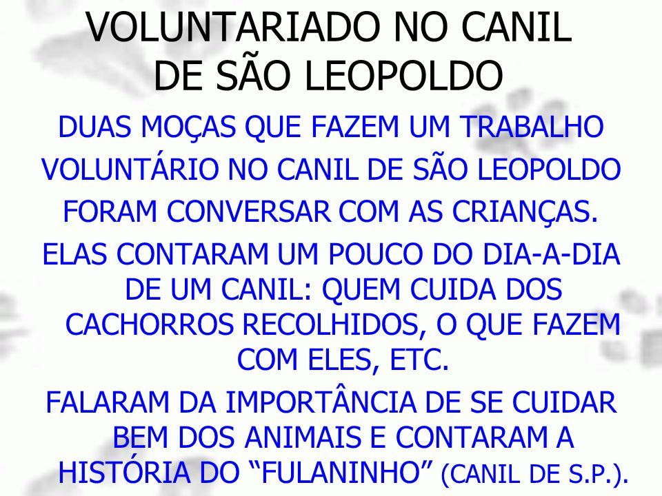 VOLUNTARIADO NO CANIL DE SÃO LEOPOLDO