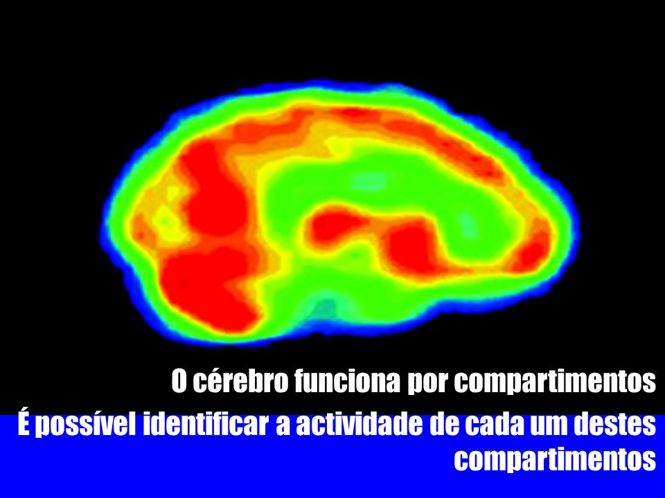 O cérebro funciona por compartimentos