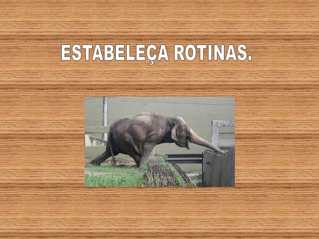 ESTABELEÇA ROTINAS.