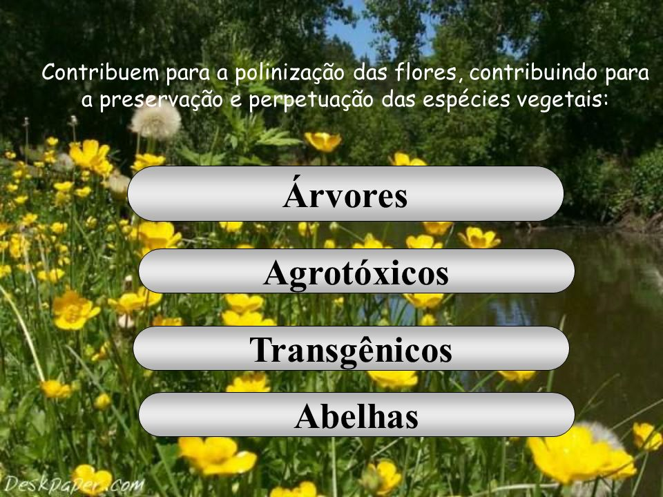 Árvores Agrotóxicos Transgênicos Abelhas