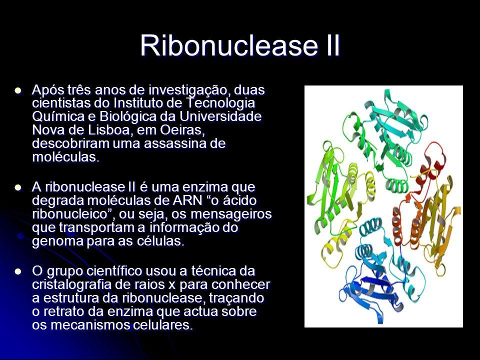 Ribonuclease II