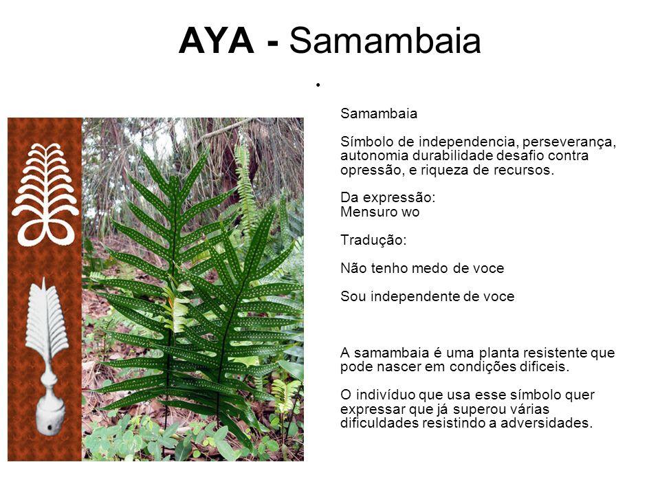 AYA - Samambaia