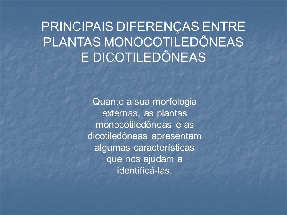PRINCIPAIS DIFERENÇAS ENTRE PLANTAS MONOCOTILEDÔNEAS E DICOTILEDÔNEAS