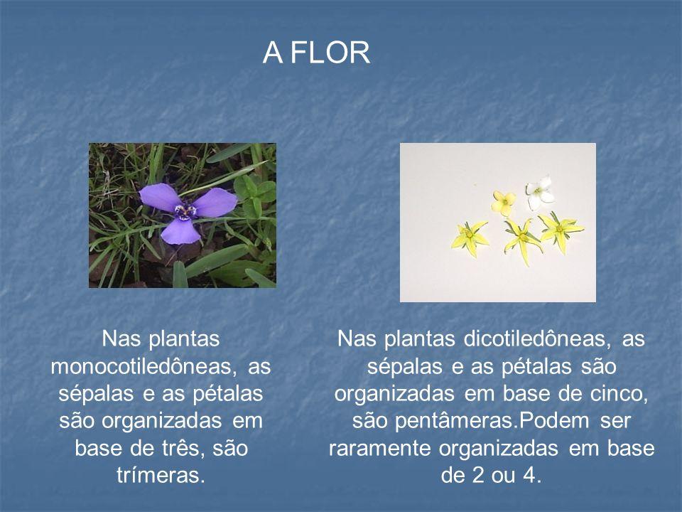 A FLOR Nas plantas monocotiledôneas, as sépalas e as pétalas são organizadas em base de três, são trímeras.