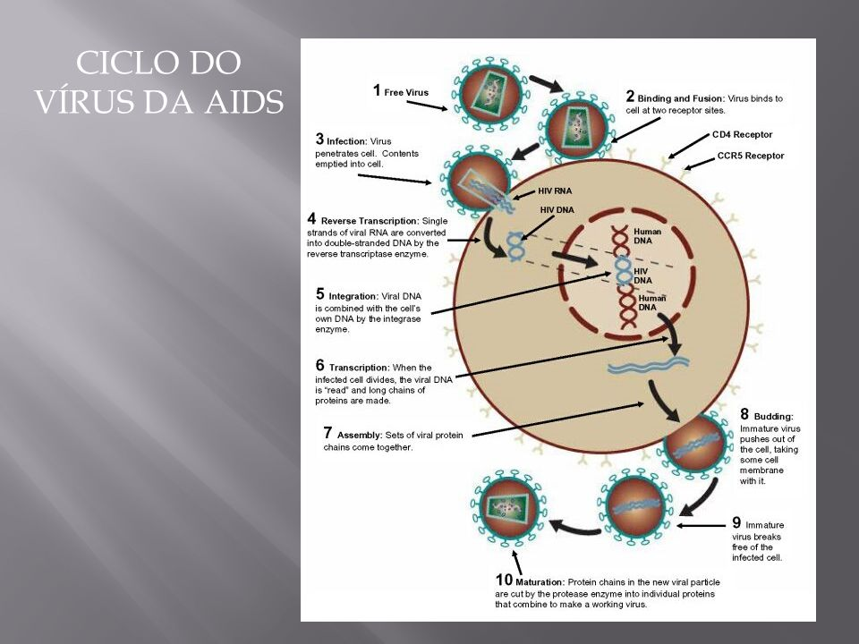 CICLO DO VÍRUS DA AIDS