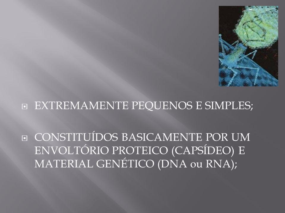 EXTREMAMENTE PEQUENOS E SIMPLES;