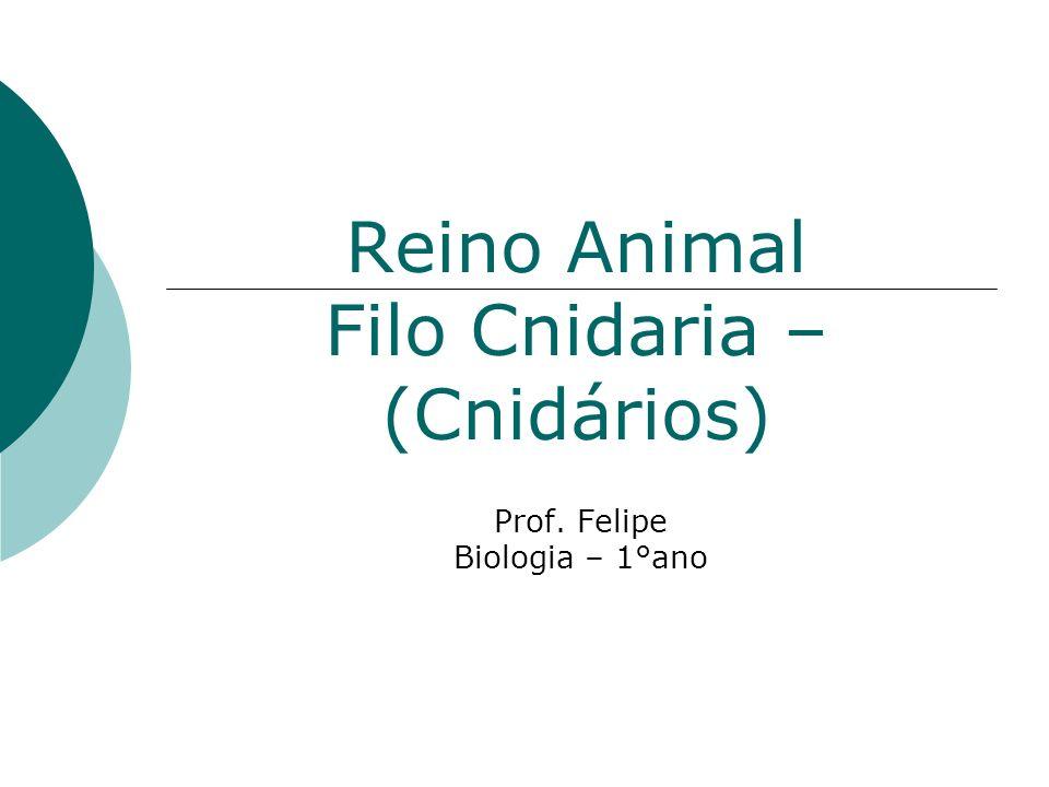 Reino Animal Filo Cnidaria – (Cnidários)