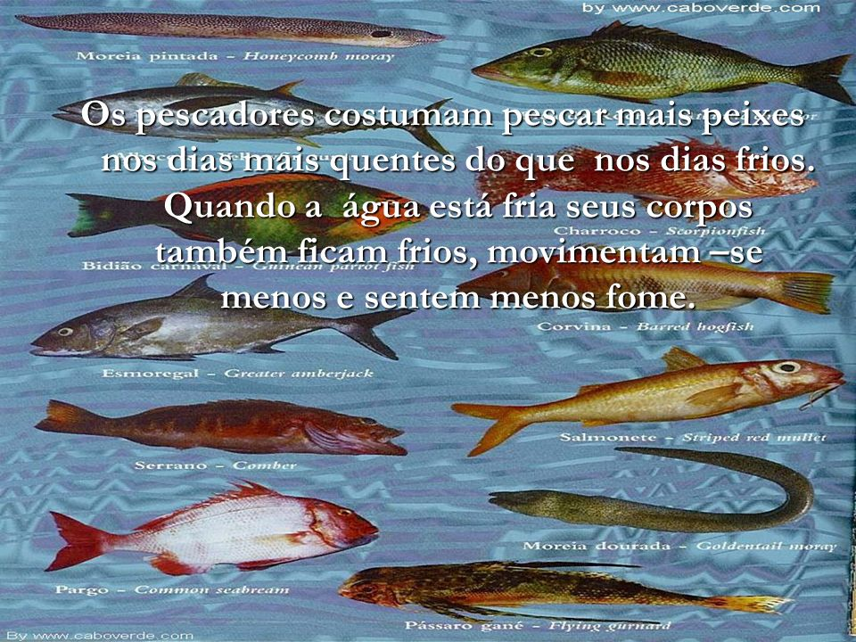 Os pescadores costumam pescar mais peixes nos dias mais quentes do que nos dias frios.