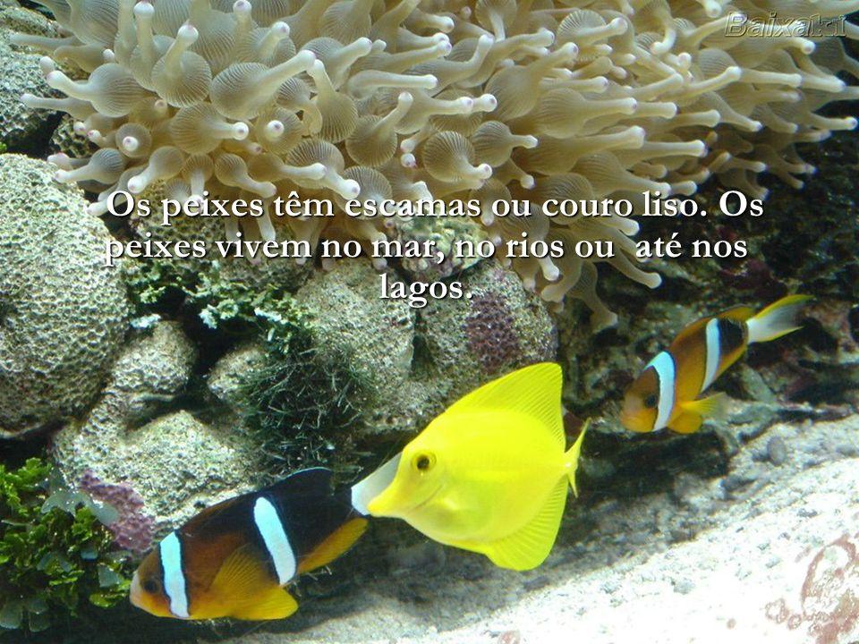 Os peixes têm escamas ou couro liso