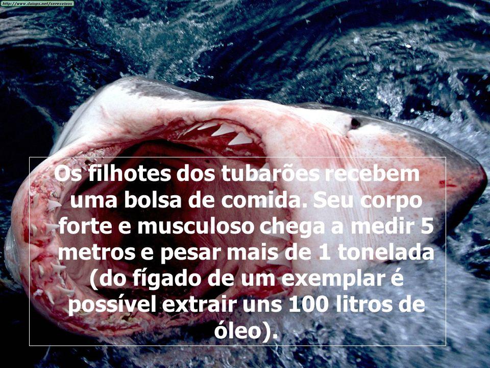 Os filhotes dos tubarões recebem uma bolsa de comida