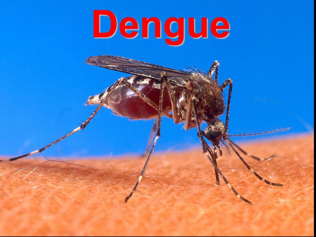 Dengue Dengue