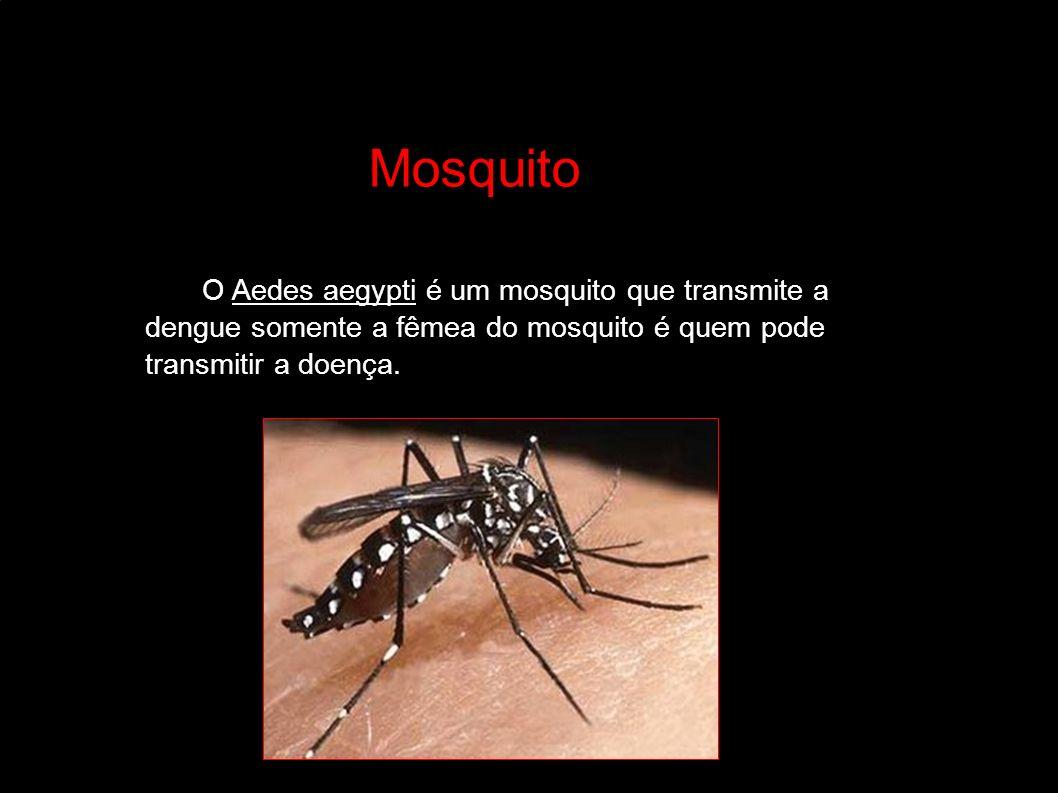 MosquitoMosquito Mosquito Mosquito