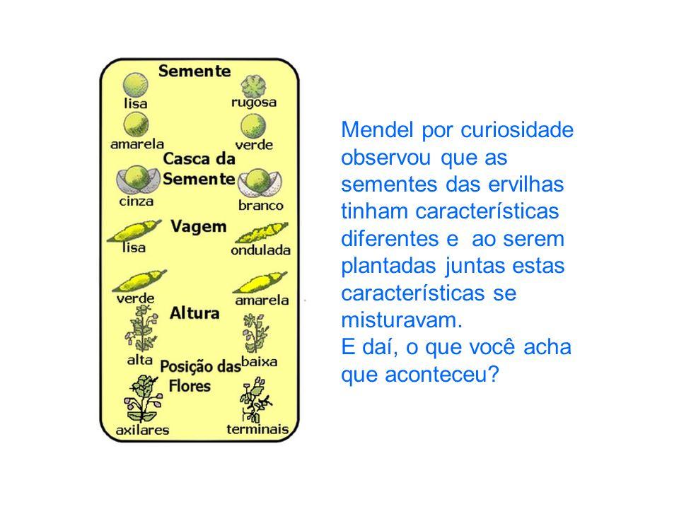 Mendel por curiosidade observou que as sementes das ervilhas tinham características diferentes e ao serem plantadas juntas estas características se misturavam.