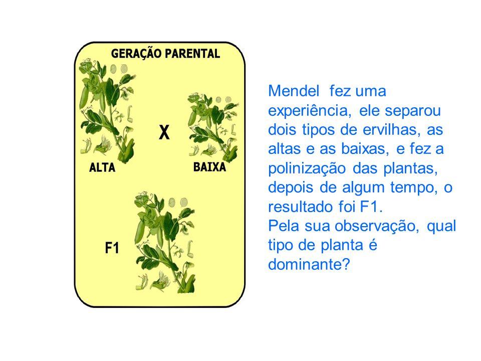Mendel fez uma experiência, ele separou dois tipos de ervilhas, as altas e as baixas, e fez a polinização das plantas, depois de algum tempo, o resultado foi F1.