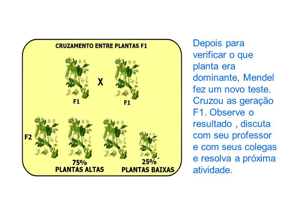 Depois para verificar o que planta era dominante, Mendel fez um novo teste.
