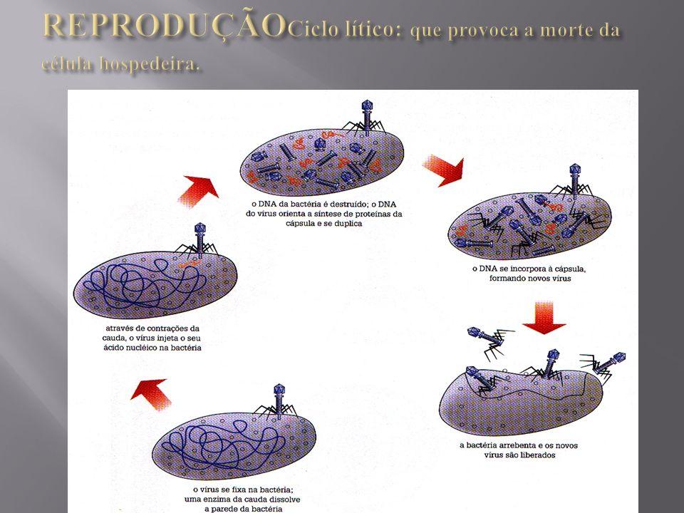 . REPRODUÇÃOCiclo lítico: que provoca a morte da célula hospedeira.