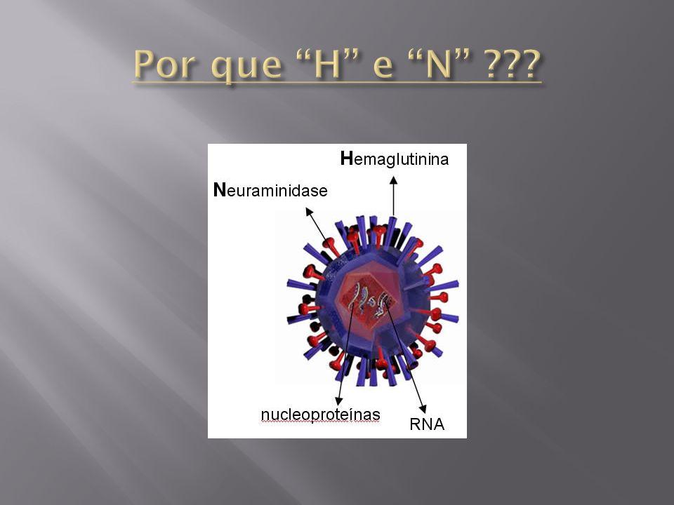Por que H e N