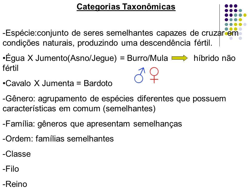 Categorias Taxonômicas