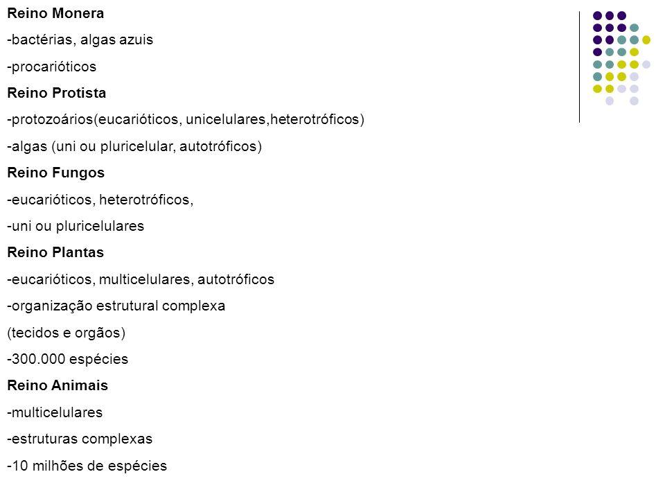 Reino Monera -bactérias, algas azuis. -procarióticos. Reino Protista. -protozoários(eucarióticos, unicelulares,heterotróficos)