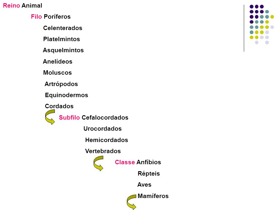 Reino Animal Filo Poríferos. Celenterados. Platelmintos. Asquelmintos. Anelídeos. Moluscos. Artrópodos.