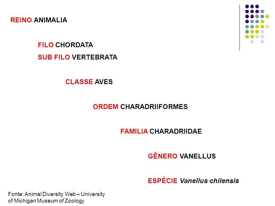 ORDEM CHARADRIIFORMES