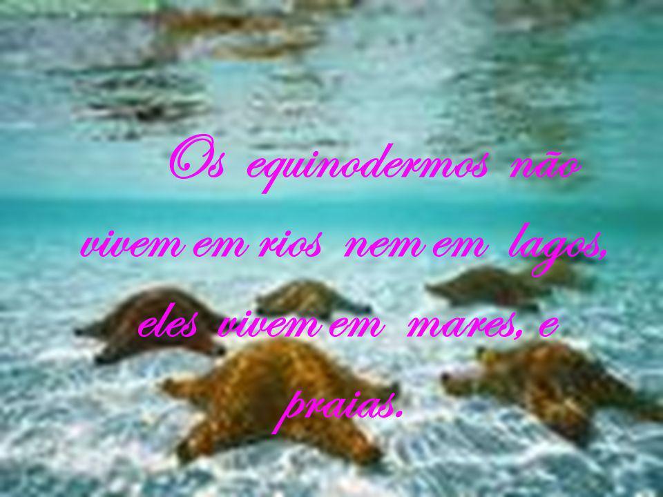 Os equinodermos não vivem em rios nem em lagos, eles vivem em mares, e praias.