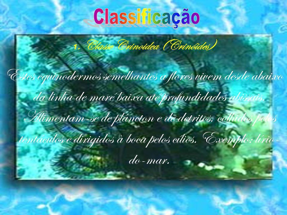 1. Classe Crinoidea (Crinóides)