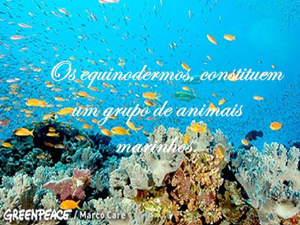 Os equinodermos, constituem um grupo de animais marinhos.